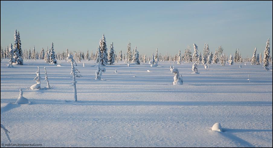 Снежным