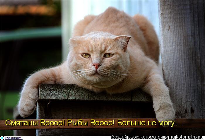Спустившись аудио приколы с кошками в россии , афоризмы о детях прикольные и смешные афоризмы про...