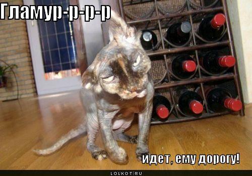 Приколы про кошек и котов самые смешные