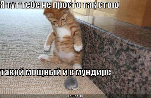 Об смешные истории про котов и кошек
